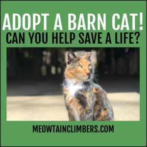 orange and black outside with text that reads adopt a barn cat