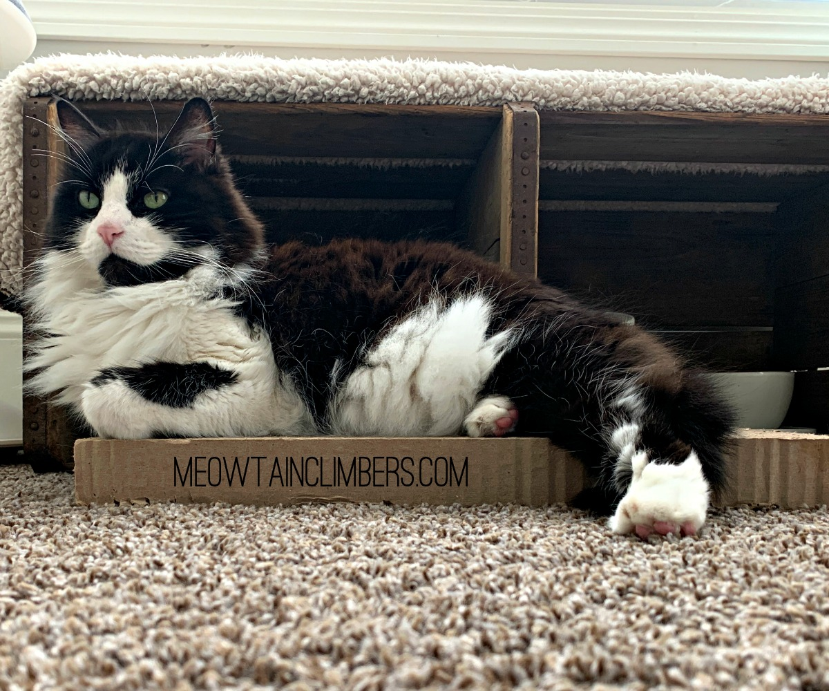 black & white fluffy cat laying on a scratching board