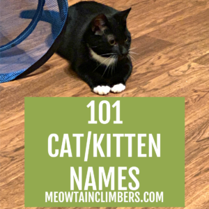black & white cat on a wooden floor. text reads 101 cat/kitten names