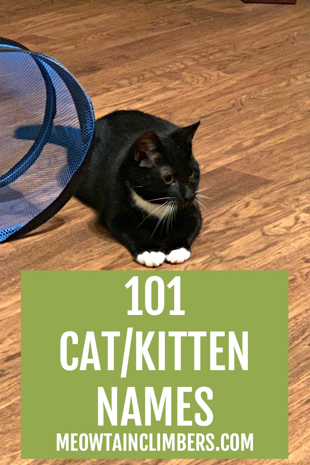 black cat with white collar and paws on a wooden floor. text reads 101 cat/kitten names