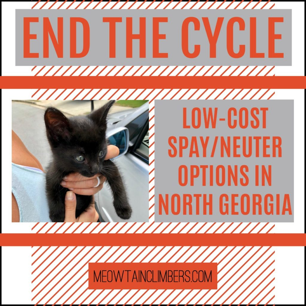 "orange, black and white graphic with text that reads ""end the cycle low-cost spay/neuter options in North Georgia"""